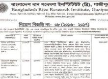 Bangladesh Rice Research Institute Job Circular